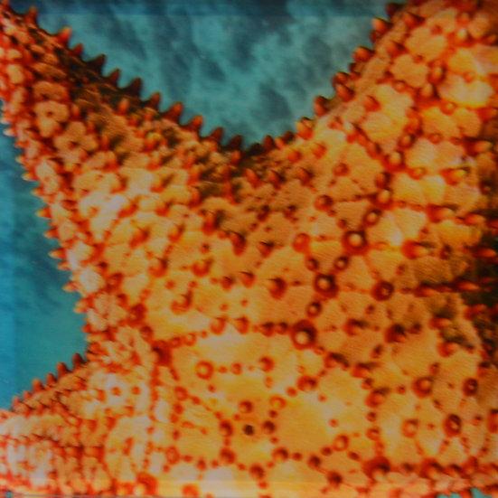 Starfish on Acrylic