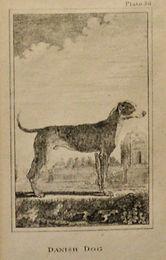 Danish Dog Lithograph