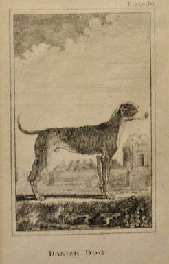Danish Dog Lithograph