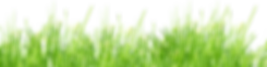 clipart-grass-clear-background-19.png