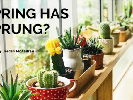 Spring Has Sprung?