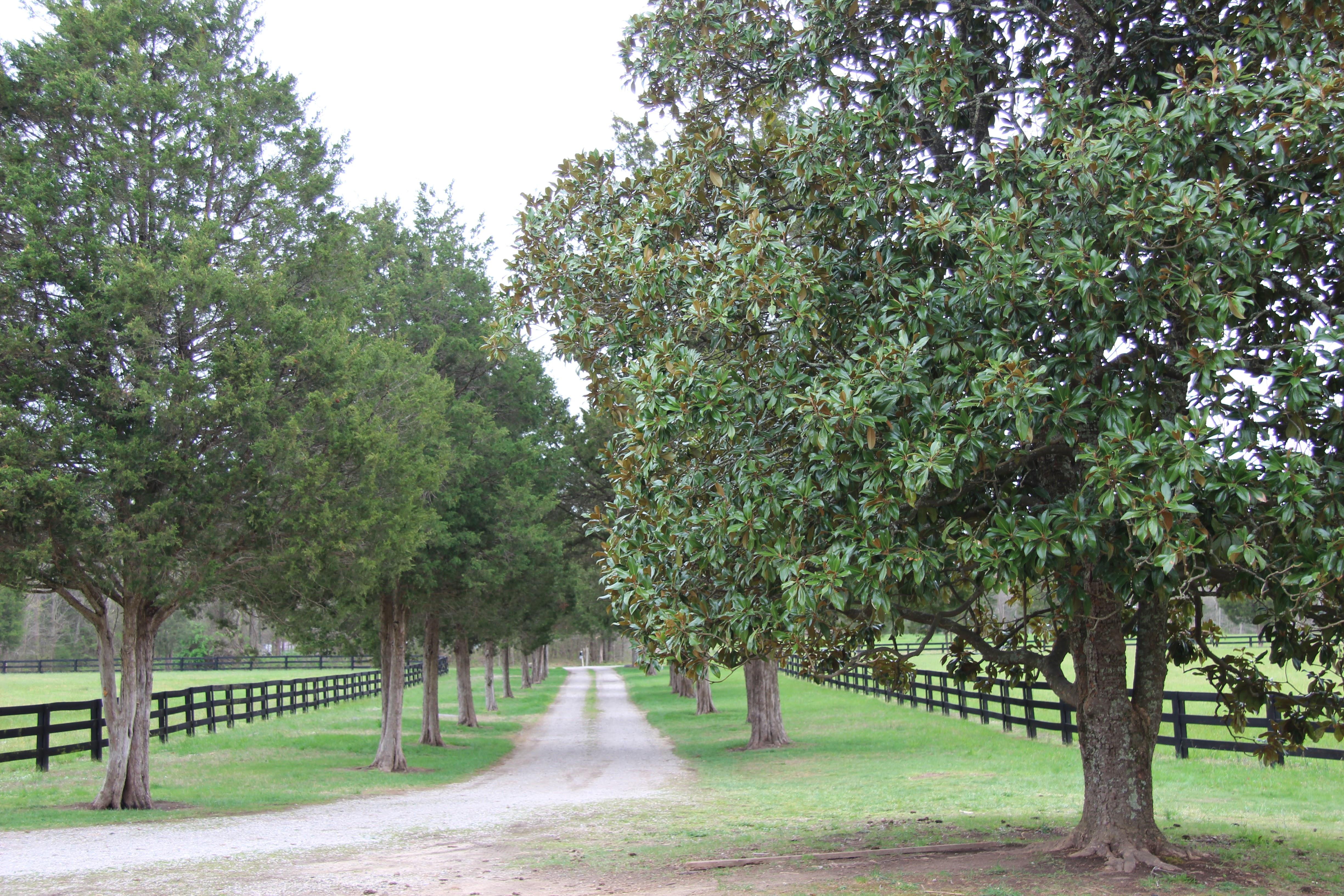 Cedar Lined Driveway