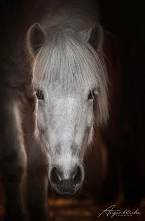 Isänder Pferdefotografie Augenblicke Ber