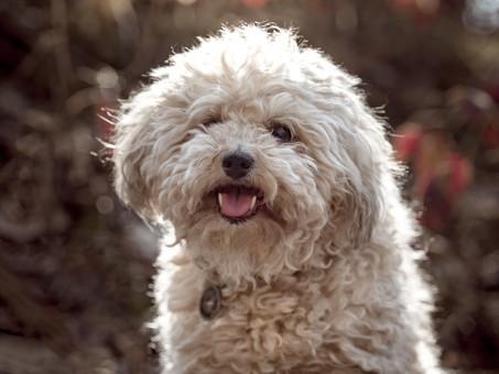 Tierfotografin Tierfotograf Hundefotogra
