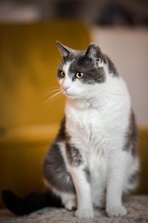 Homefotografie Katze