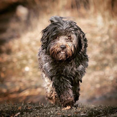 Mily 🐾 beim Spaziergangshooting__Eine b