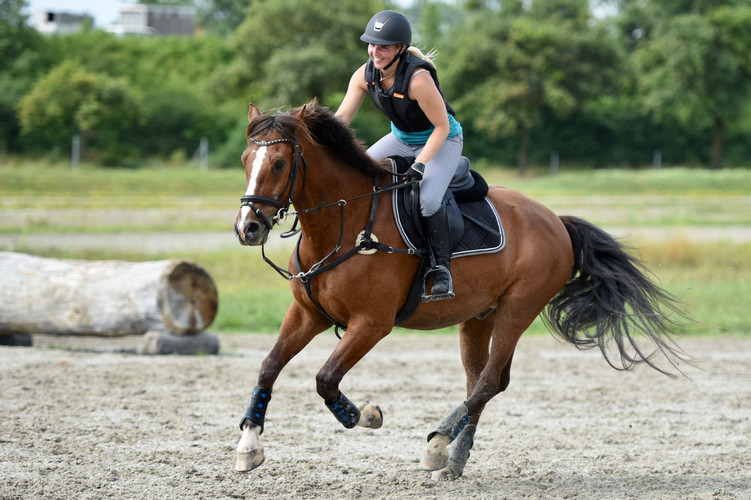 Glückliches Pferdetraining Bernarda Krie