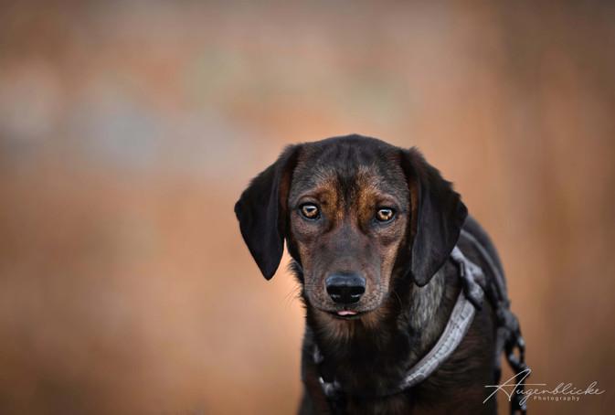 Hundefotografie mit Herz Augenblicke Ber