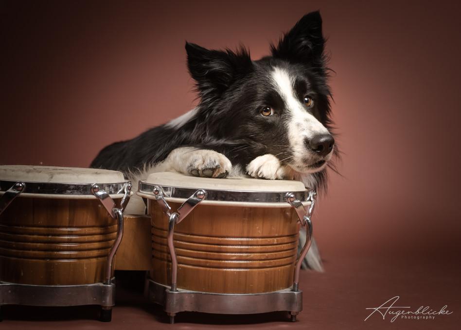 Studiofotografie Hundeshooting