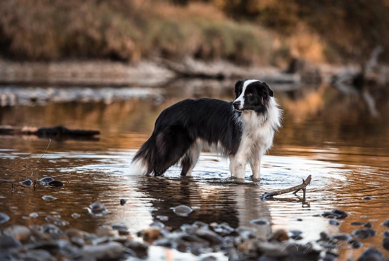 Hundefotografie Tierfotografie Bern