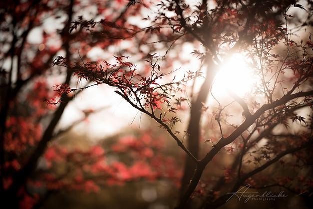 Natur Licht