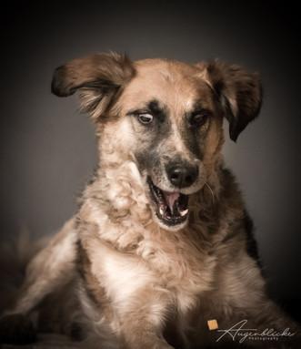 Lustiges Hundeportrait