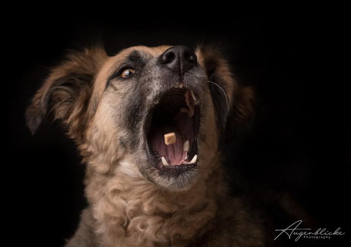 Lustiges Hundeportrait Schnappschuss ;-)