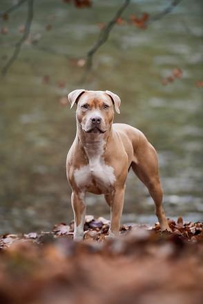 Hundefotograf Bern Augenblicke Andrea Sc