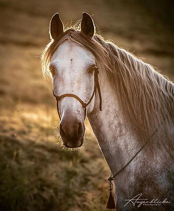 Piaffe Andalusier✨ _#hors#horse#horses#h