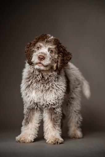 Fotografie Hunde Studio Bern