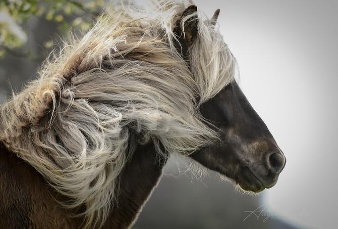 Fotoshooting Pferd l Fotografie Augenblicke l Bern