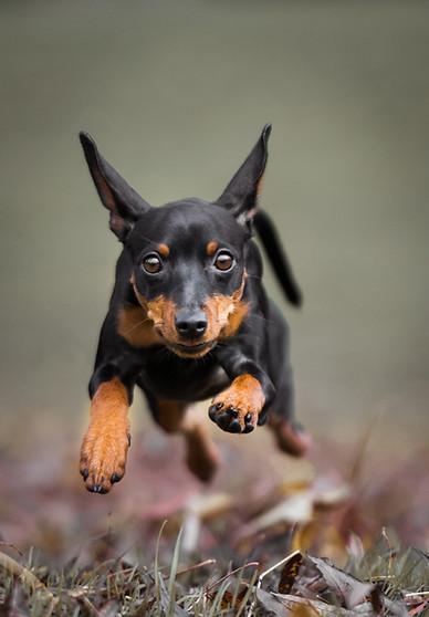 Tiere in Bewegung Hundefotografie Bern