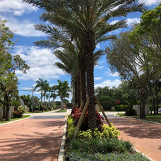 hydra palms.jpg