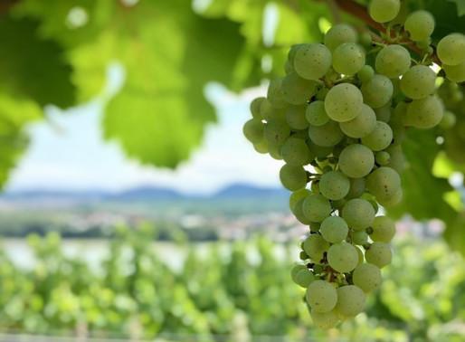Ernte 2019, Neue Lagen-Weine und Kellerbau