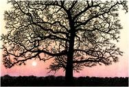 Winer Sunset