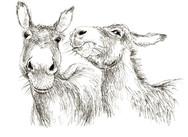 Donkey Duo