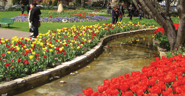 Milton Park -drive-corbett-red-tulips.jpg