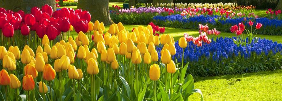 milton-park-beautiful-flowers