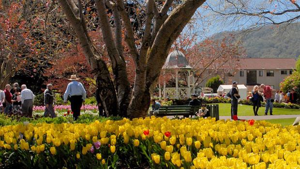 Milton Park -drive-corbett-yellow-tulips.jpg