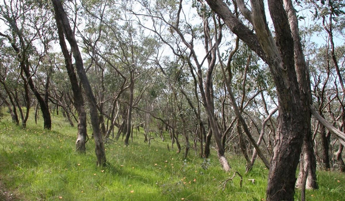 Carrick Bushland_banner.jpg