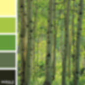 Color_Palette_CG4104_670x670.jpg
