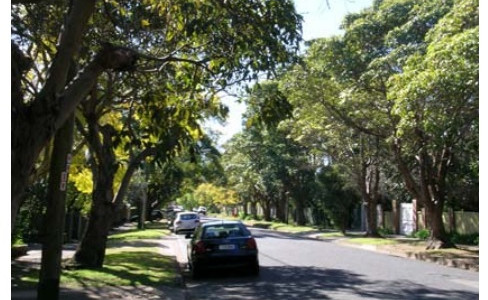 Trees of Ku-Ring-Gai Ave Turramurra