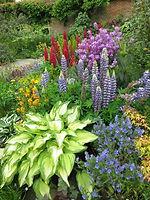 Foliage contrast in garden