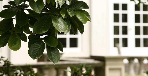 milton-park-tree-leaves