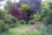 Picture_1889 Leura garden in summer.jpg