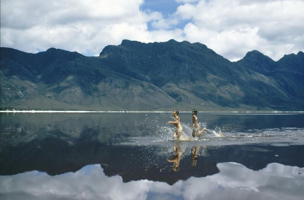 Lake Pedder, photo by Olegas Truchanas.jpg