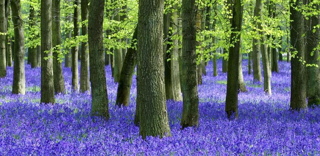 milton-park-levander-forest.jpg