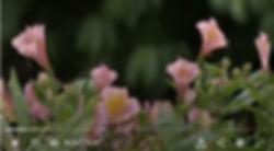 Carrick Hill Garden.jpg