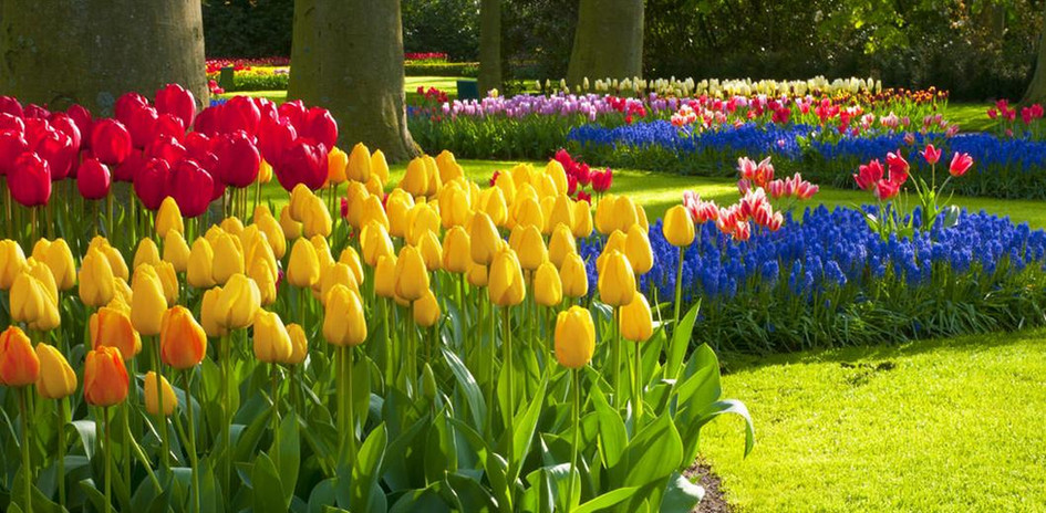 milton-park-beautiful-flowers.jpg