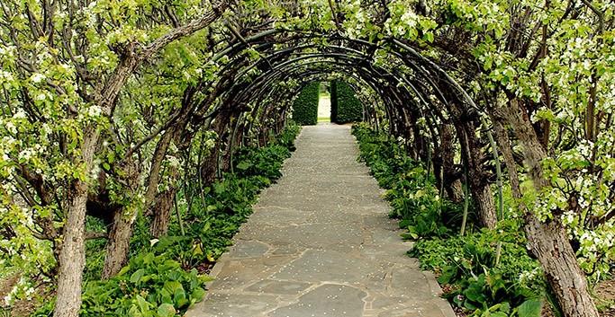 Carrick Hill pear-arbour-adj431_slider-i