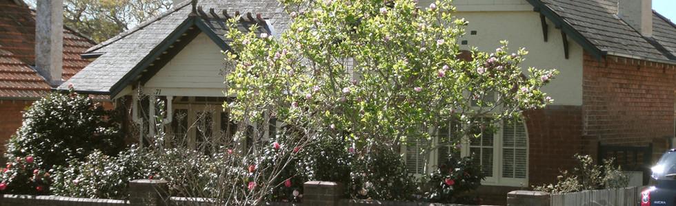 71 Ramsay Street Haberfield in Spring