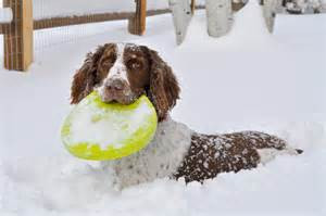 Winterizing Your Dog's Routine
