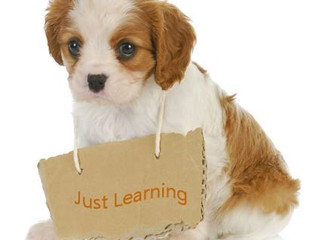 Puppy Training - Group Classes starting January and February