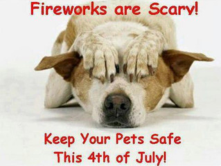 4th of July - Fireworks are Scary!