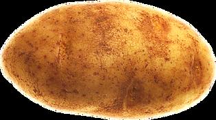 potato_düzenlendi.png