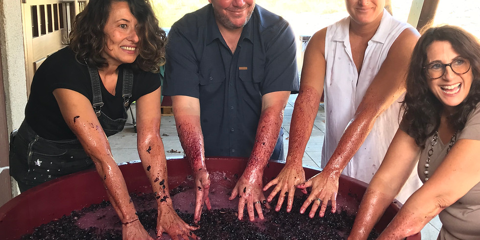 Tasting in Spain with the Head Wine-O! (virtually)