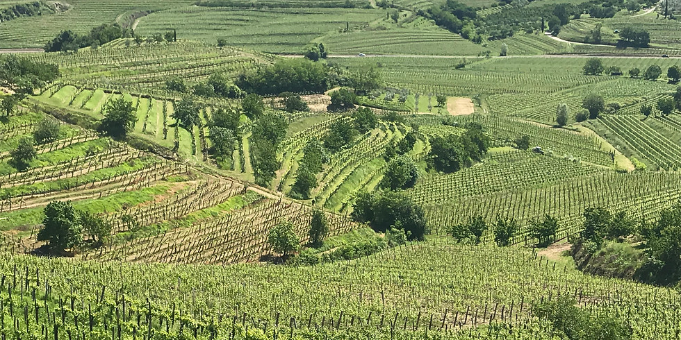 Tasting with Mattia Scarbolo of Scarbolo Winery in Friuli, Italy