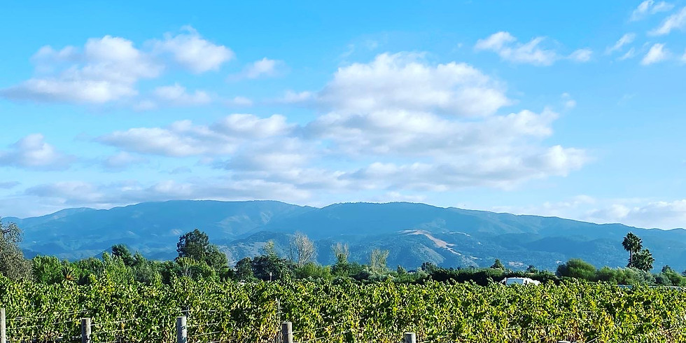 Santa Barbara Wine Tour for Harvest!