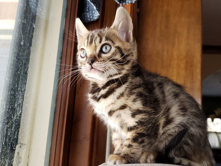 New Year, New Blog, New Kittens