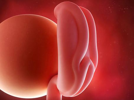 1. Hafta Hamilelik Nasıl Anlaşılır? Erken Hamilelik Belirtileri Nelerdir?